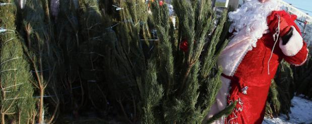 После 10 декабря в Самаре начнут продавать елки