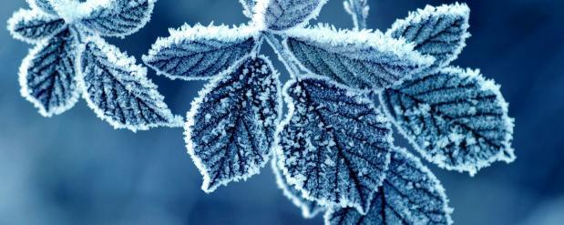 В Самаре снова будут заморозки